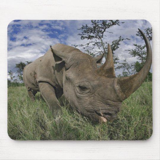 Black Rhinoceros, Diceros bicornis, Kenya Mouse Mat