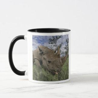 Black Rhinoceros, Diceros bicornis, Kenya Mug