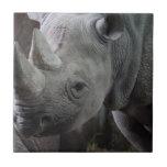 Black Rhinoceros Photo Small Square Tile