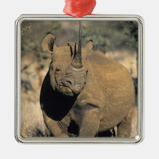 Black Rhinocerous, (Diceros bicornis), Northern Christmas Ornament