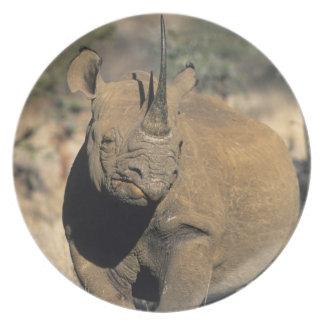 Black Rhinocerous, (Diceros bicornis), Northern Plate