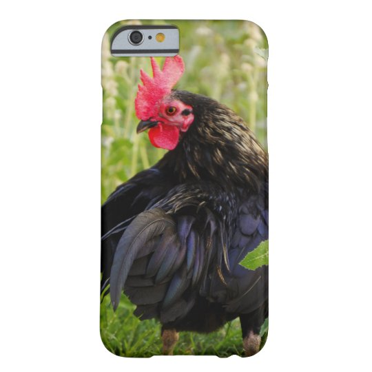 Black Rooster Barely There iPhone 6 Case