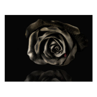 Black rose postcard