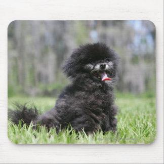 Black Senior Pomeranian Mouse Mat