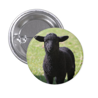 Black Sheep - Button