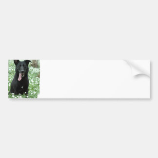 Black Shepherd Bumper Sticker