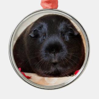 Black Short Haired Romance Guinea Pig Christmas Ornament