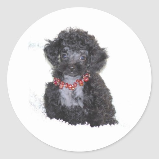 Black Silver Toy Poodle puppy bling Round Sticker