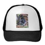 Black snake trucker hat