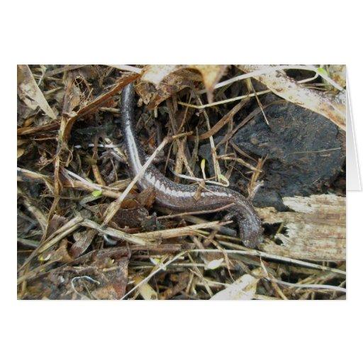 Black Speckled Salamander Note Card