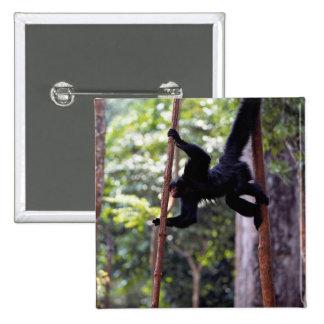 Black spider monkey (Ateles paniscus paniscus) 15 Cm Square Badge