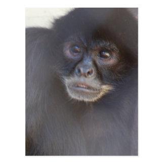 Black Spider Monkey  Postcard