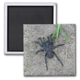 Black Spider Square Magnet