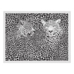 Black Spots Leopards Camouflaged Poster