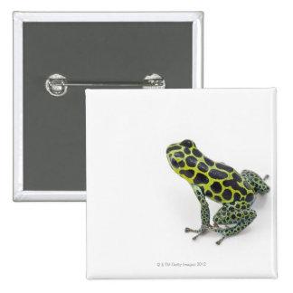 Black Spotted Green Poison Dart Frog 15 Cm Square Badge