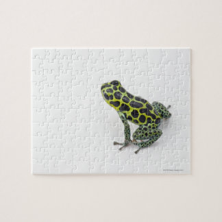 Black Spotted Green Poison Dart Frog Jigsaw Puzzle