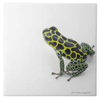 Black Spotted Green Poison Dart Frog Large Square Tile