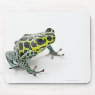 Black Spotted Green Poison Dart Frog Mouse Pad