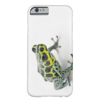 Black Spotted Green Poison Dart Frog (Ranitomeya Barely There iPhone 6 Case