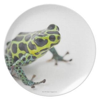 Black Spotted Green Poison Dart Frog (Ranitomeya Dinner Plates