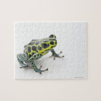 Black Spotted Green Poison Dart Frog (Ranitomeya Jigsaw Puzzle