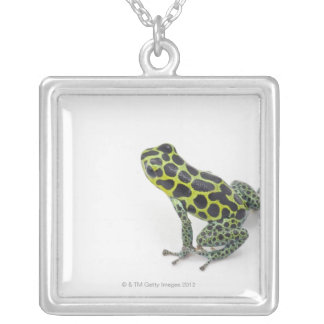 Black Spotted Green Poison Dart Frog Silver Plated Necklace
