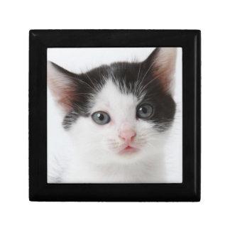 Black Spotted Kitten Gift Box