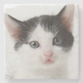 Black Spotted Kitten Stone Coaster
