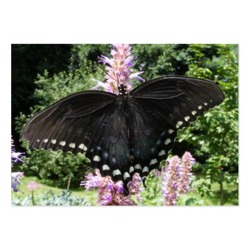 Black Swallowtail 67 ~ ATC Pack Of Chubby Business Cards