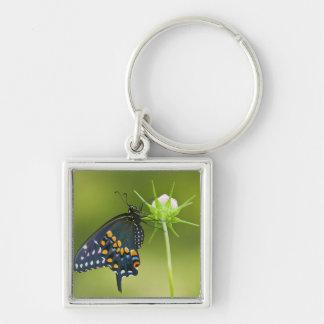 Black Swallowtail butterfly Key Ring