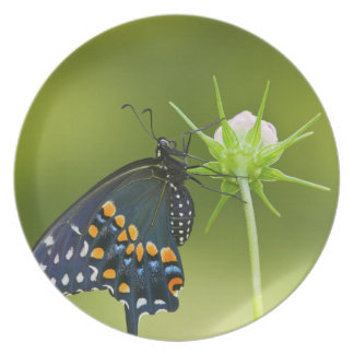 Black Swallowtail butterfly Party Plate