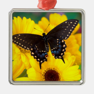 Black Swallowtail butterfly Silver-Colored Square Decoration