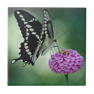 Black Swallowtail Butterfly Tile
