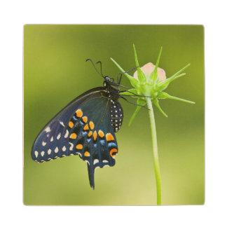 Black Swallowtail butterfly Wood Coaster