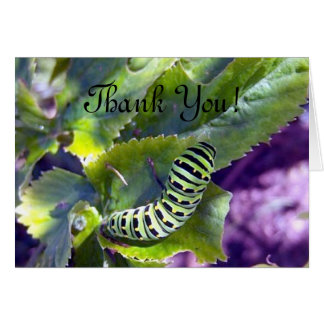 Black Swallowtail Caterpillar 2 Greeting Card