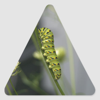 Black swallowtail caterpillar (parsleyworm) on Dil Triangle Sticker