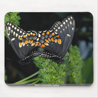 Black swallowtails mating mousepads