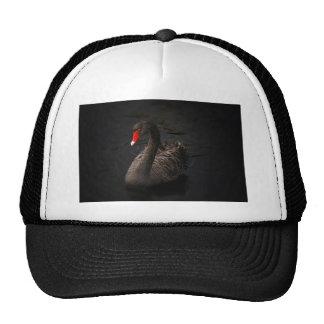 Black-swan-1229 Cap