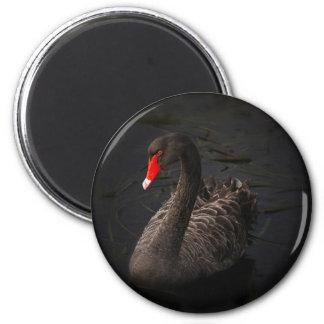 Black swan 6 cm round magnet