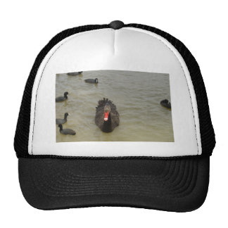 Black Swan Cap