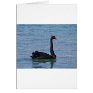 Black Swan Cards