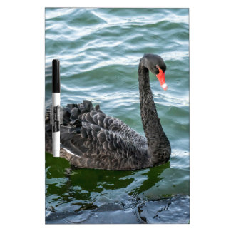 Black Swan Dry-Erase Board