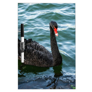 Black Swan Dry-Erase Boards