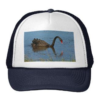 Black Swan Hat