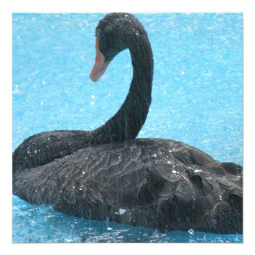 Black Swan Invitations