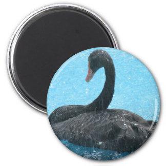 Black Swan Magnet Refrigerator Magnets