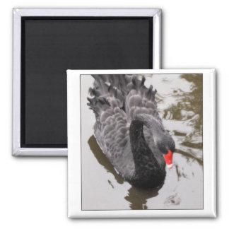 Black Swan Square Magnet