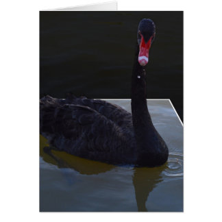 Black Swan Swimming In Dimensional Pond, Card