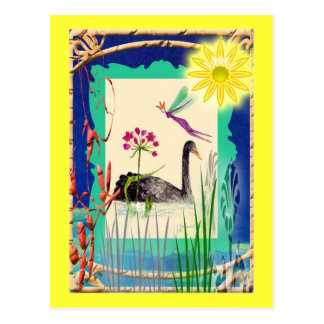 black swan with sun postcard