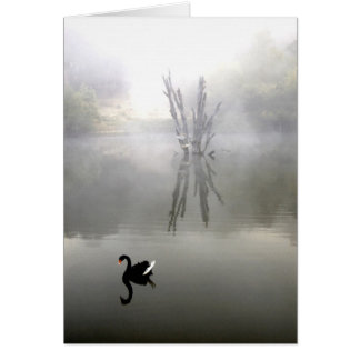 """Black Swan With White Feather"" Card"